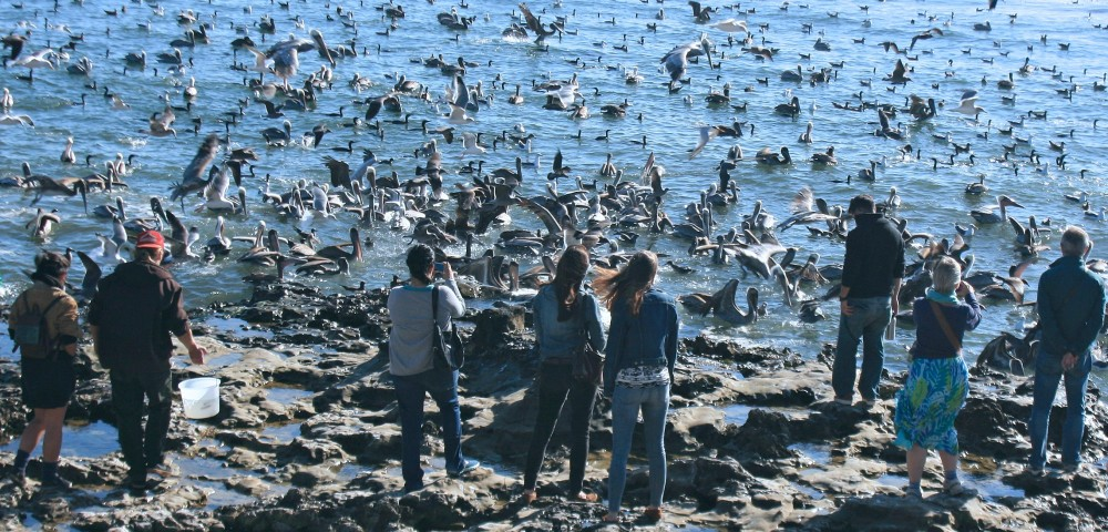 http://66.147.244.134/~ealthyoc/wp-content/uploads/2014/01/cropped-anchovies-seabirds1.jpg